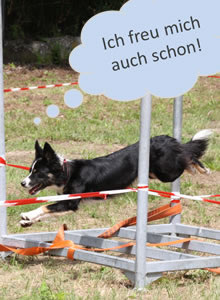Heeressportverein Krems-Mautern - Sektion Hundesport